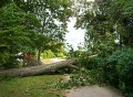 albero-caduto